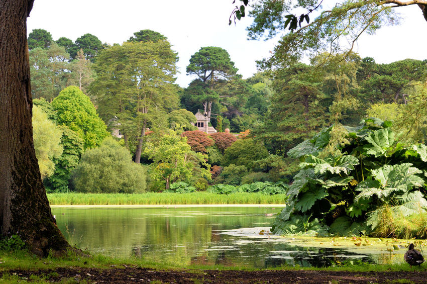 Beauty In Nature Day Giant Gunnera Grass Green Green Color Growth Idyllic Lake Lakeshore Landscape Lush Foliage Mount Stewart National Trust Nature Non Urban Scene Northern Ireland Outdoors Plant Sky Tranquil Scene Tranquility Travel Destinations Tree Water Mount Stewart