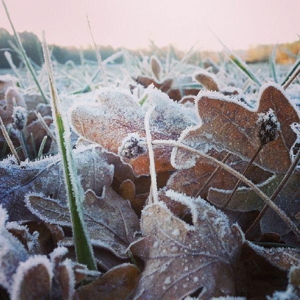 Igersgermany Instamood Hoar Hoarfrost frost leaves leaf earlymorning cold freezing fall