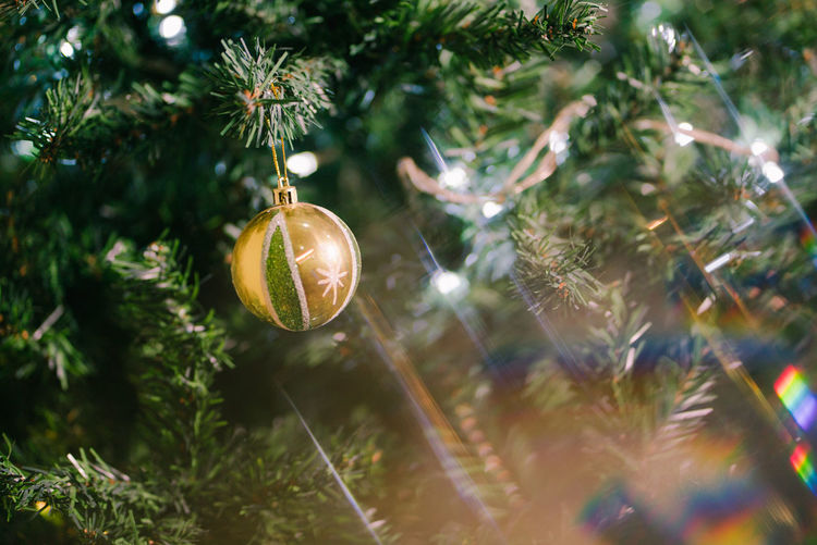 Christmas greetings Christmas Tree Celebration christmas tree Christmas Decoration Christmas Ornament Decoration Holiday Plant Close-up No People Holiday - Event Hanging Day Nature Gold Colored Selective Focus Celebration Event Growth Outdoors