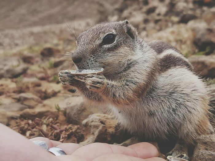 Close-Up Of Person Feeding Chipmunk
