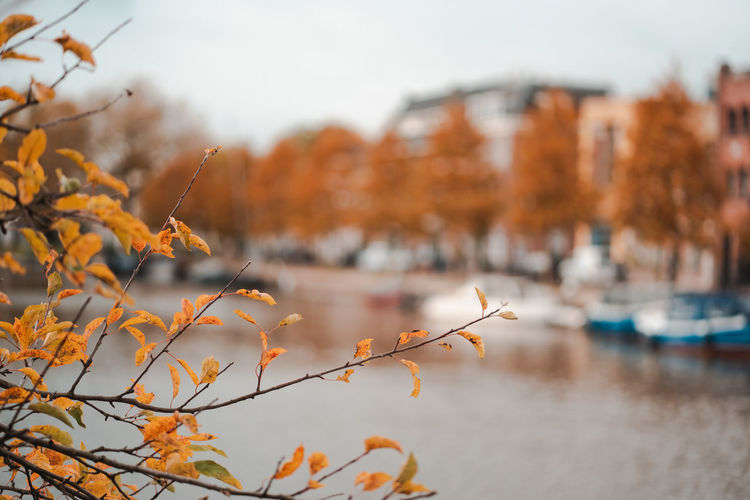 Plant by river against buildings during autumn