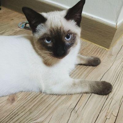 멀보냥 닝겐.. 잠오나 보다 . . . . 일상 고양이 고냥이 고양이스타그램 고냥이스타그램 냥 냥이 냥스타그램 cat 샴고양이 오늘은목요일 20150528