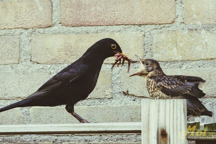 Nature Natuur Check This Out Feeding  Birds Spring Garden Molfotografie Netherlands Bennekom