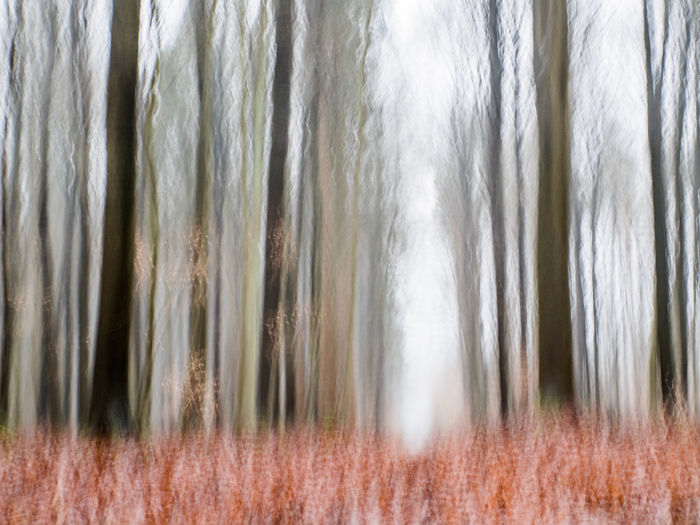 Abstract Forest Forest Photography Sachsenwald Wischer Forest Walk Autumn Trees Tree Trunk Tree Trunks No People Plant Tree Nature Land Day Tranquility Outdoors Blurred Motion Growth Trunk Full Frame Beauty In Nature Backgrounds Environment Motion Scenics - Nature Non-urban Scene
