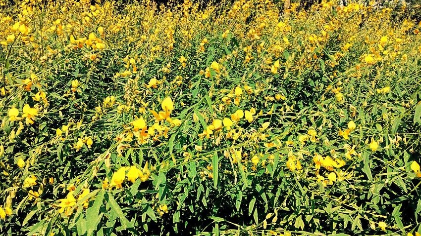 Flower Garden Flower Garden Flower Beautiful Flower Photography View Flower View Yellow Tones Nature Natural Pattern