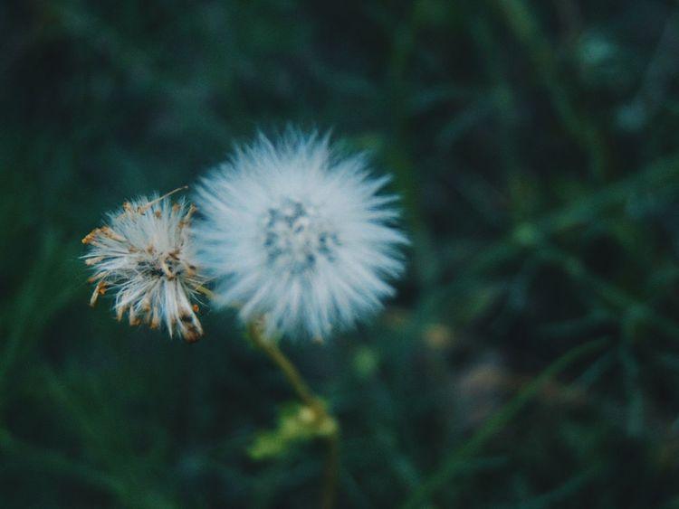 Vscocam Vscoflowers Vscogood Flowers Vsconature
