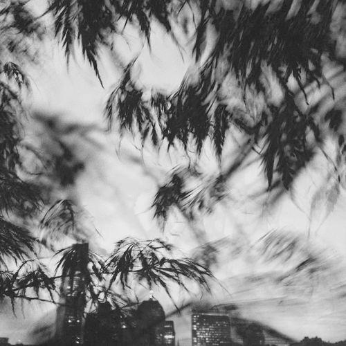 JohnRuggieri Blackandwhite Wind Black And White Skyline Sky Up Close Street Photography