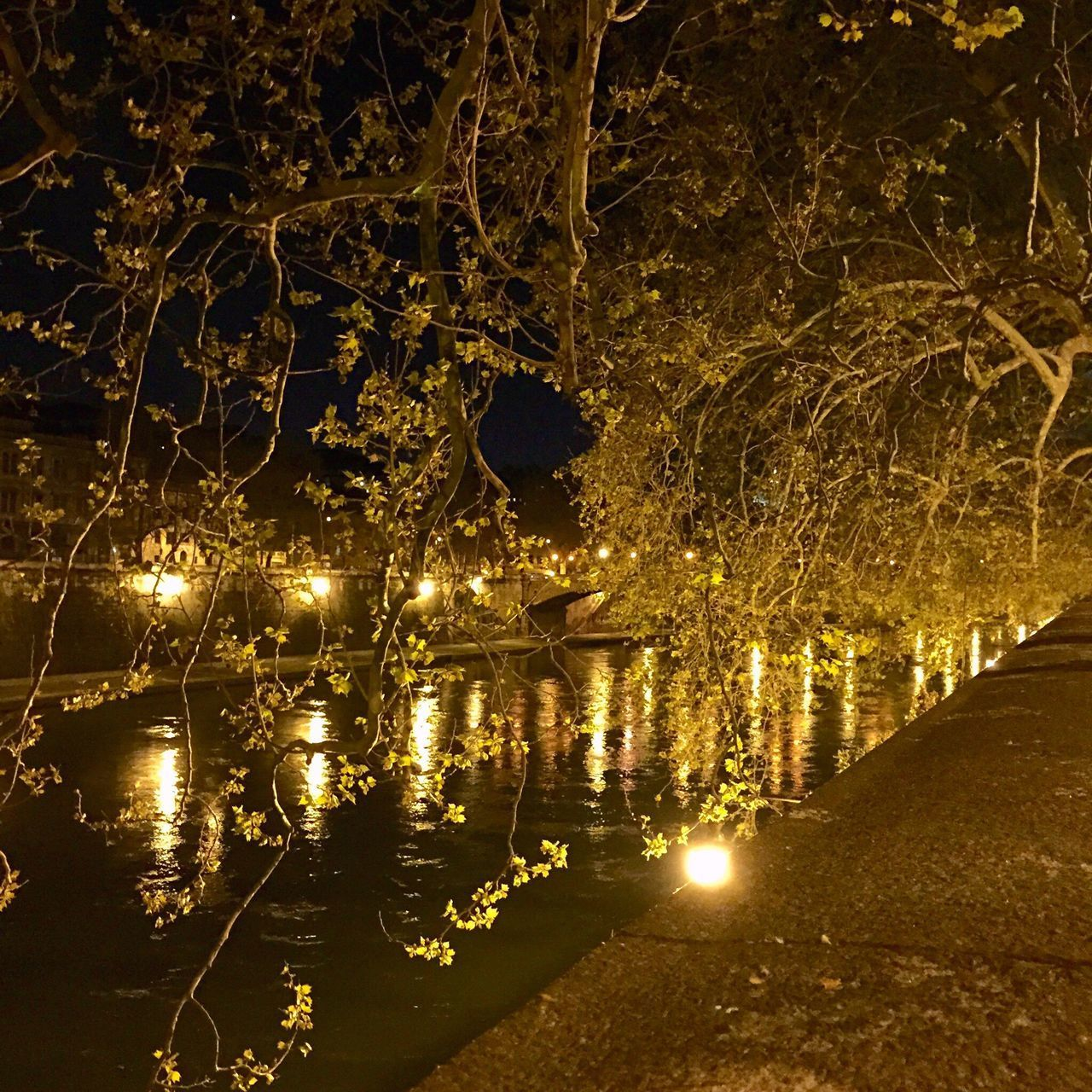 illuminated, night, tree, water, reflection, nature, no people, lake, plant, lighting equipment, waterfront, tranquility, branch, outdoors, glowing, beauty in nature, celebration, transportation, light