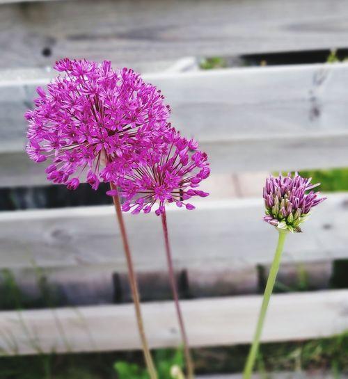Rykkinn Flower