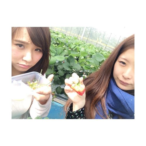 Strawberry Hunting Fine Weather Spring! Delicious ♡ With Friends Love
