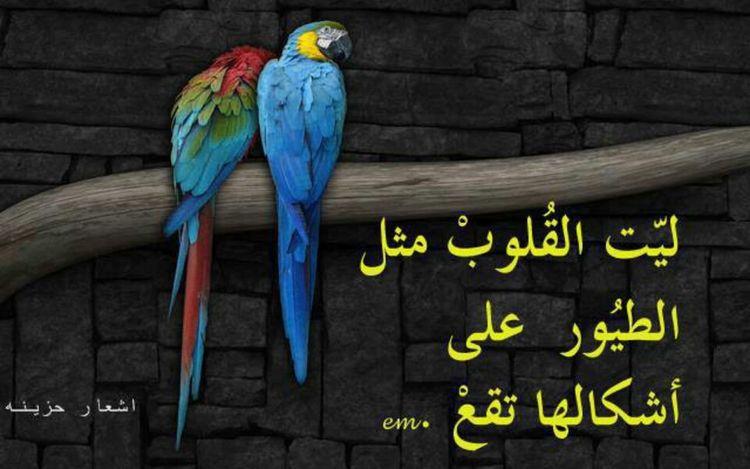 وياليت القلوب مثل الطيور