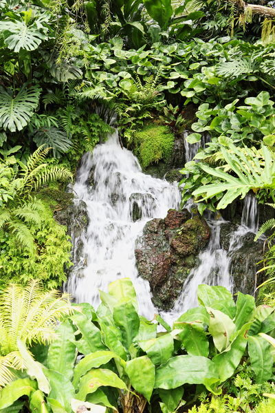 Beauty In Nature Botanical Gardens Capturing Motion Green Color Growth Nature Outdoors Plant Tranquility Water