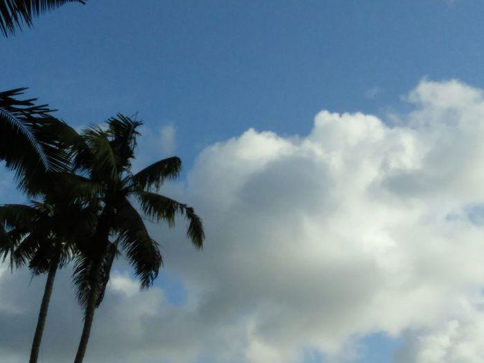Blue Sky Nature Beautifulinnature Naturalbeauty Photography Landscape Coconut Trees White Clouds Evening