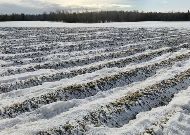 Frozen farm field ready for Spring. Cold Temperature Winter Farming Rows Farm Field Ice Snow Frozen No People Landscape Scenics Outdoors Cold Beauty In Nature Nature
