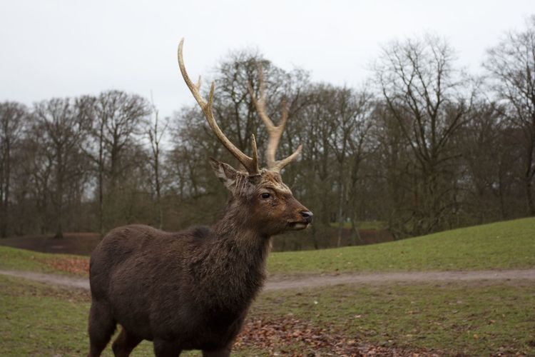 Wildlife Deer Check This Out Aarhus, Denmark Beuty Of Nature