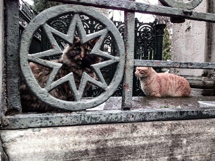 Cat Cats Rain Traveling