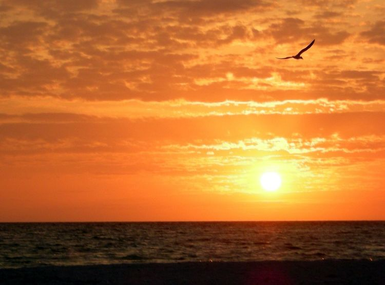 I never grow tired of a sunset at the beach! Sunset Sea Silhouette Sky Nature Outdoors Sun Horizon Over Water Beauty In Nature Scenics Bird Tranquil Scene Break The Mold TCPM Exploring Freedom Set Yourself Free One Bird Flying Beach No People Place Of Heart Live For The Story