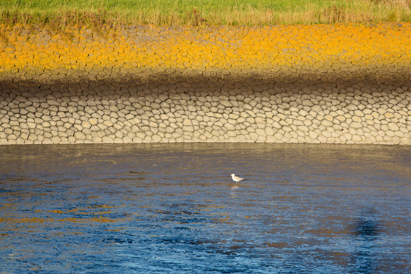 View of seagulls on sea shore