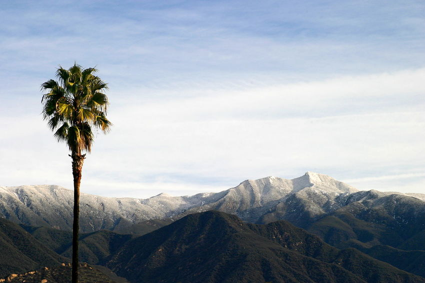 Southern California Snow Landscape shot of the Ojai valley with snow on the mountains and a palm tree in the foreground. California Clouds Cold Forest Green Ice Landscape Mountain Mountains Nature Ojai Outdoor Outdoors Palm Tree Panorama Scenery Scenic Sky Snow Snowy Tourism Travel Valley Water Winter