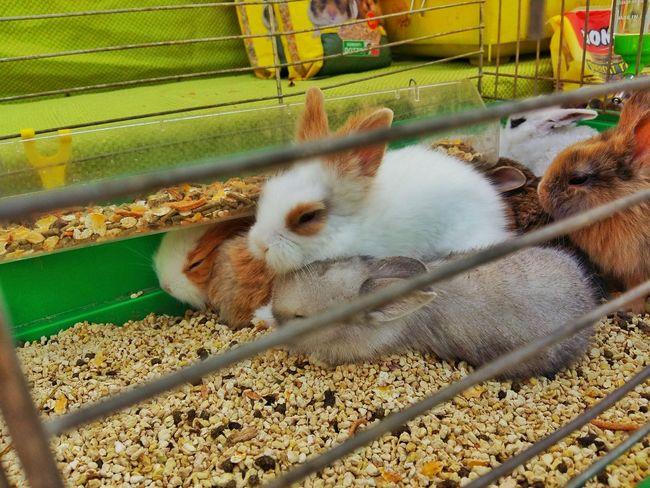 Rabbits Rabbit Coniglio Conigli Animals Animal Animal Photography Animal_collection Gabbia Cage Showcase July 2016 Little Rabbit Showcase July