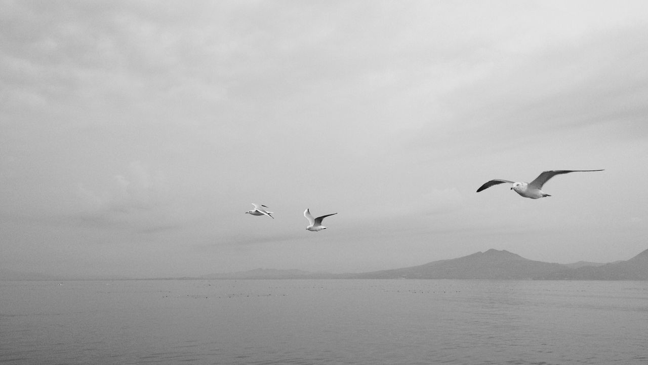 flying, animals in the wild, bird, animal themes, nature, spread wings, animal wildlife, mid-air, no people, water, beauty in nature, day, outdoors, sky, sea, scenics