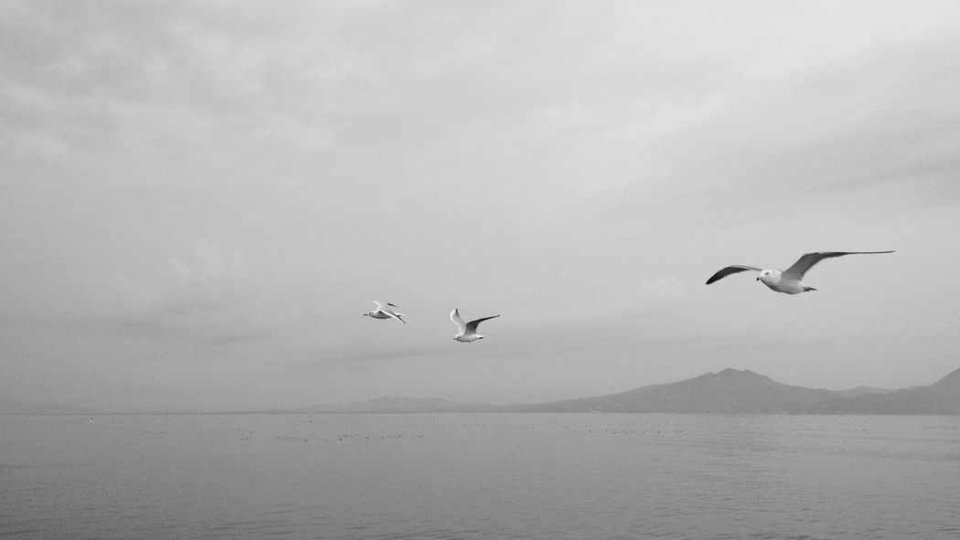 Seagulls in flight Monochrome Tranquility Black And White Nature Seagull In The Air Bird Tranquil Scene Seagulls In Flight Clouds And Sky IPhoneography Beauty In Nature Scenics Spread Wings Sea Clouds Sky Ferry Views Calm Sea Day Japan