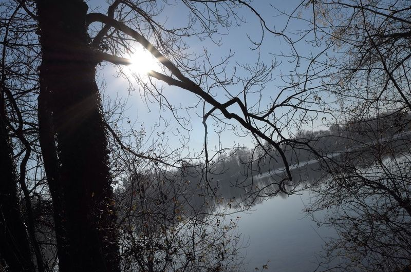 this lake does not inspire anymore... Tree Nature Bare Tree Tranquility Beauty In Nature Sunlight Scenics No People Tranquil Scene Outdoors My Lake