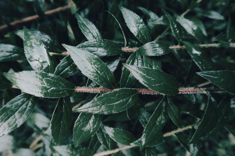 Full frame shot of plants during winter