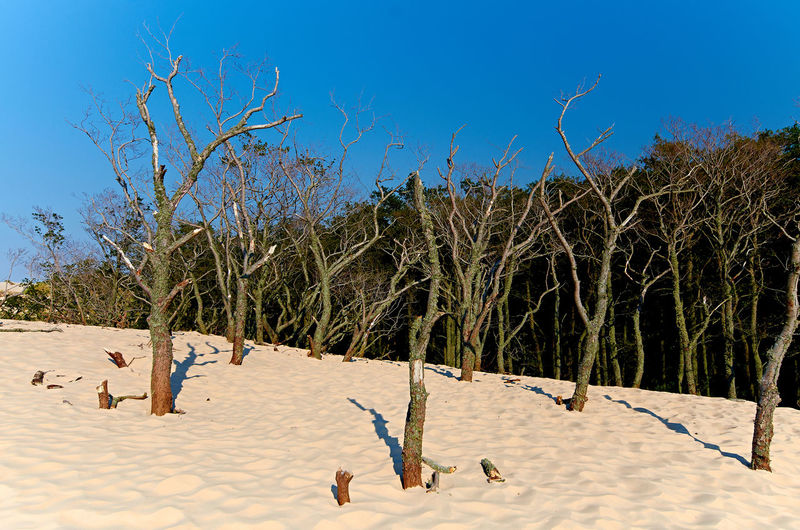 Panoramic Shot Of Trees On Beach Against Blue Sky