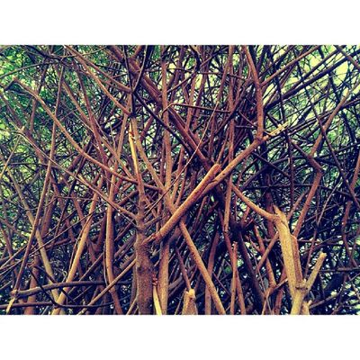 Branches. Tree Trees Treelife Nature xperiazsonyphotographypotdsundayinstagramfalloctoberinstagoodpeace