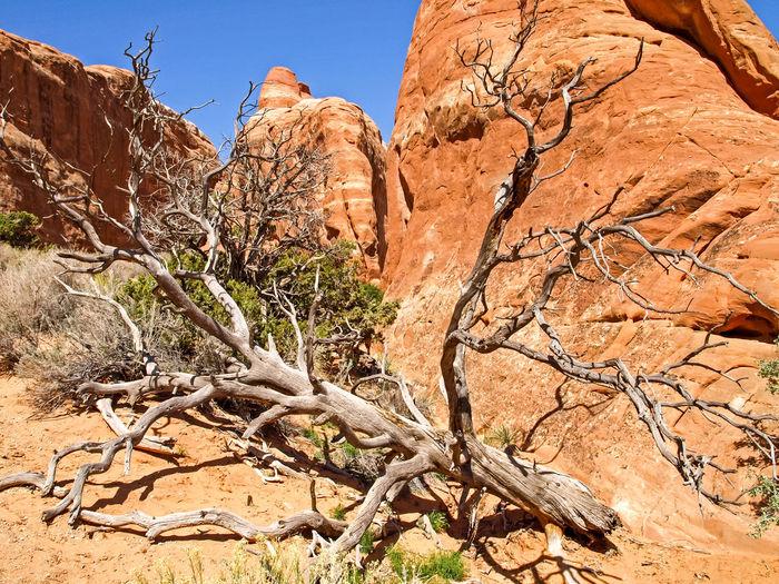 Dead tree on rock formation in desert