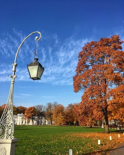 View of street lights in park during autumn