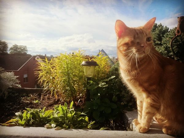 Pets Animal Themes Cat One Animal Sky Plant Cloud Day Animal Animal Head  Cats 🐱 Cat♡ Cats Cats Of EyeEm Catsofeyem Cat Lovers Flowers,Plants & Garden Home Sweet Home Home Flowerpower Flower Photography Nature Green Color