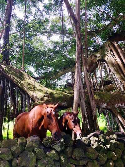 Beautiful horses Beautiful Tree Plant Animal Themes Mammal Animal Vertebrate Nature Outdoors