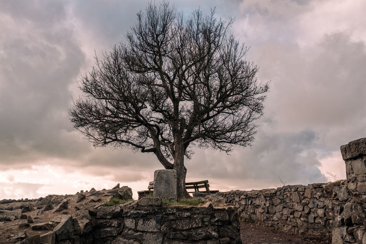 View of bare tree against cloudy sky