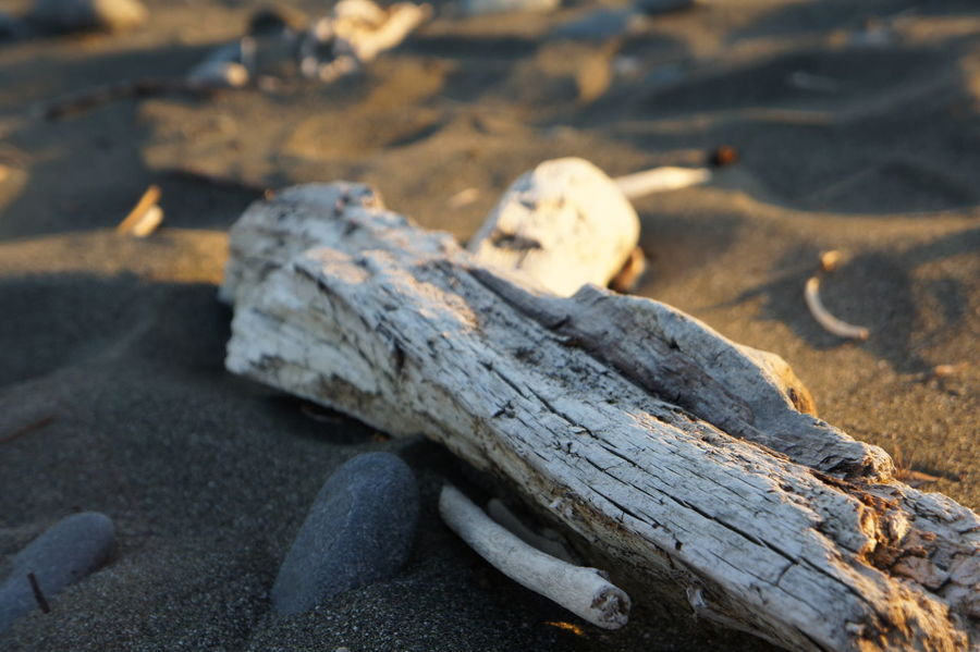 Gold Beach, Oregon Oregon Beach Close-up Day Driftwood Driftwood Beach Focus On Foreground Gold Beach Log Nature No People Rock Rock - Object Sand Selective Focus Solid Stone Sunlight Sunset Timber Wood Wood - Material Wood At Beach