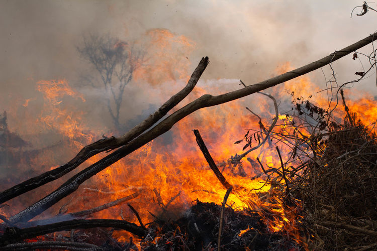 Low angle view of bonfire on plants in forest