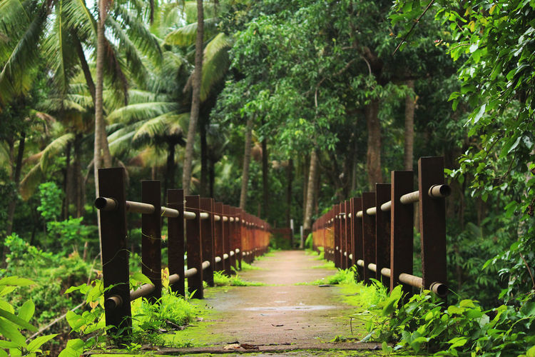 View of footpath in forest