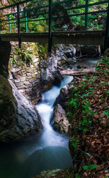 Walking bridge over Jasle creek in the Devil's passage canyon in Croatia Tree Water Waterfall Forest Rock - Object Plant Flowing Water Stream Long Exposure Stream - Flowing Water