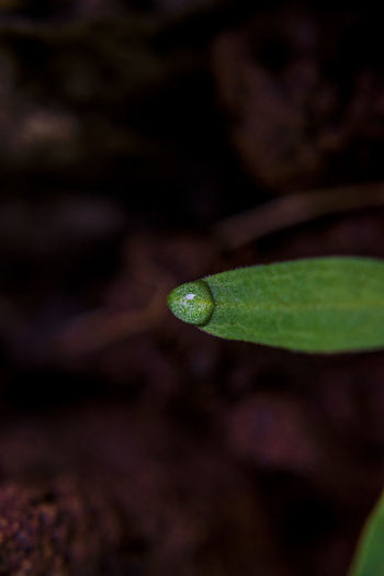 Water drop Close-up Green Color No People Leaf Plant Part Plant Animal Nature One Animal Selective Focus Snake Animal Themes Animal Wildlife Reptile Outdoors Day Animal Head  Poisonous Water Drop