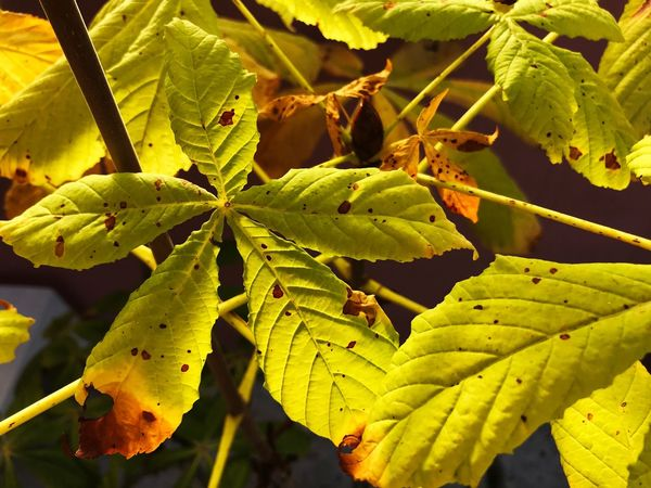 Autumn Autumn Colors Autumn Leaves Leaf Beauty In Nature No People Nature Outdoors Close-up Fragility Plant