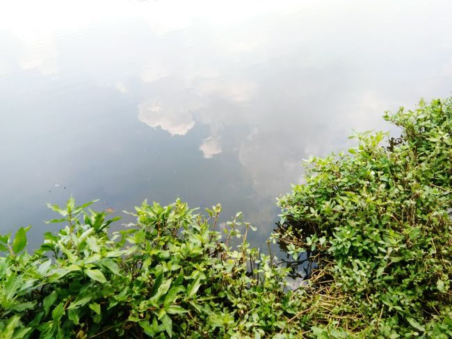 Tree Mountain Water Lake Fog Social Issues Mountain Peak Sky Plant Volcanic Crater Volcanic Landscape Growing Agricultural Field Volcanic Rock Erupting