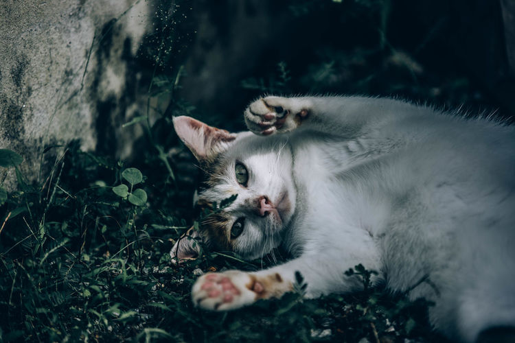 Cat lying on a plant