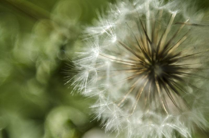 Full frame shot of flower