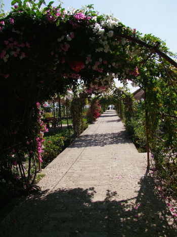 Walkway covered in flowers Architecture Beauty In Nature Beauty In Nature Blue Sky Composition Covered Walkway Flowering Shrubs Flowers Fragility Freshness Full Frame Growth Mandalay Myanmar Nature No People Outdoor Photography Outdoors Plant Sunlight And Shadow Sunset Tranquil Scene Tranquility Walkway