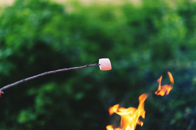 Marshmallows Fire Picnic Tasty Golf Club Golf Outdoors No People Day Tree Nature Close-up Freshness Food Stories