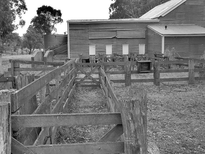 Architecture Black And White Black And White Photography Building Exterior Built Structure Day No People Outdoors Shearing Shed Old Sheep Shed Roof Sky Tree