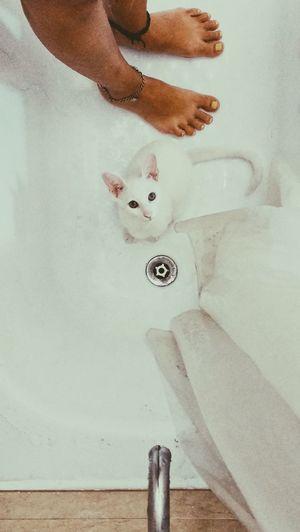 Buenos Aires Buenos Aires, Argentina  Human Leg Argentina Photography Wilde Gato Cat Pets Feline Gatos Domestic Animals White Blanco