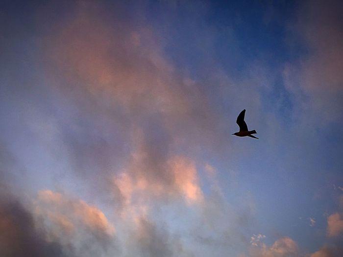 Free as a bird. Being A Beach Bum Clouds And Sky EyeEm Best Shots Just Looking Up... Sunset Free As A Bird