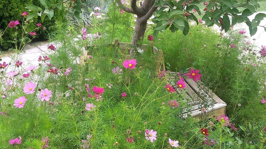 Covered Growth Outdoors Green Color Day Nature Flower No People Plant Tree Beauty In Nature Fragility Branch Stand Alone Beauty Beauty In Nature Freshness Flower Head Blooming Multi Colored Nature_collection Flowers_collection Close Up Benches_Of_The_World_Unite Bench Seat Scenics Landscape